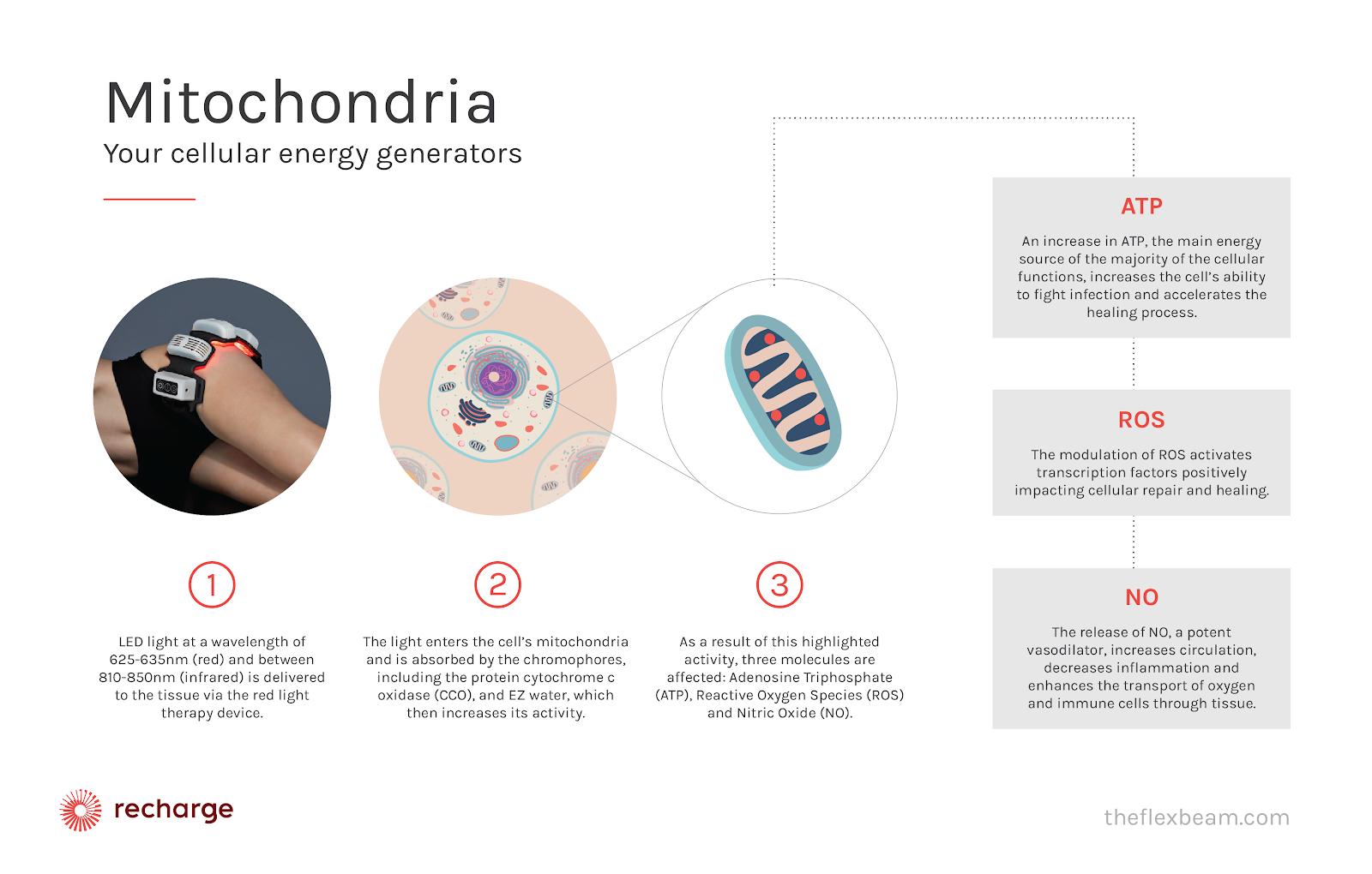 photobiomodulation-process-diagram