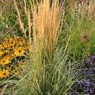 https://www.vitroflora.pl/img/produkty/rosliny/_137X137/calamagrostis-overdam_79037_4.jpg