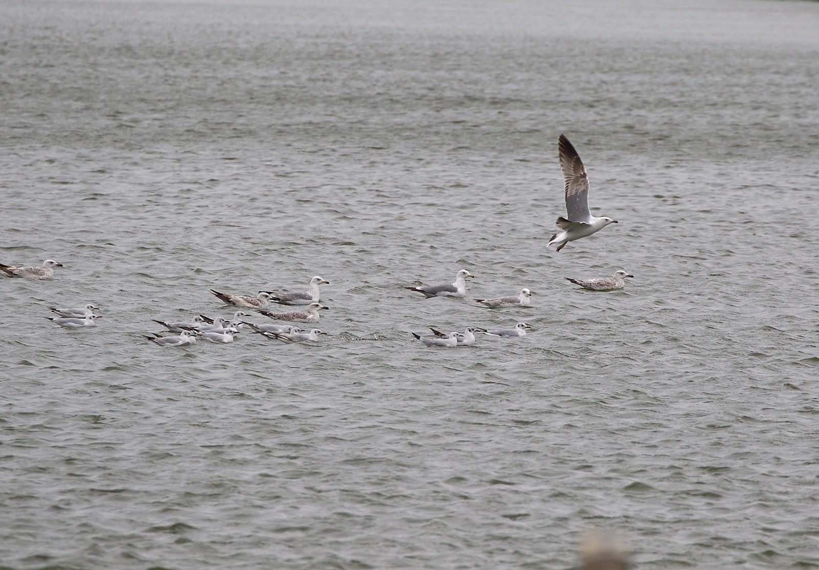 gulls_rsz.jpg