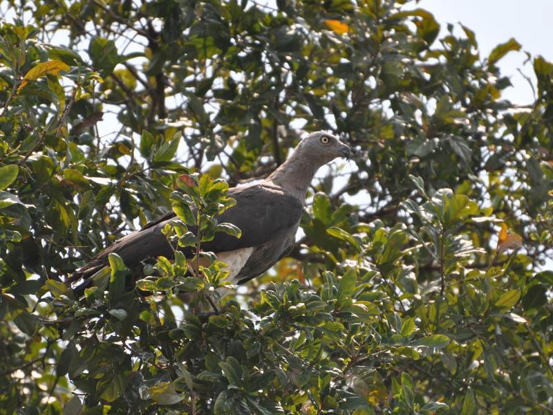 Total Bird Reserve
