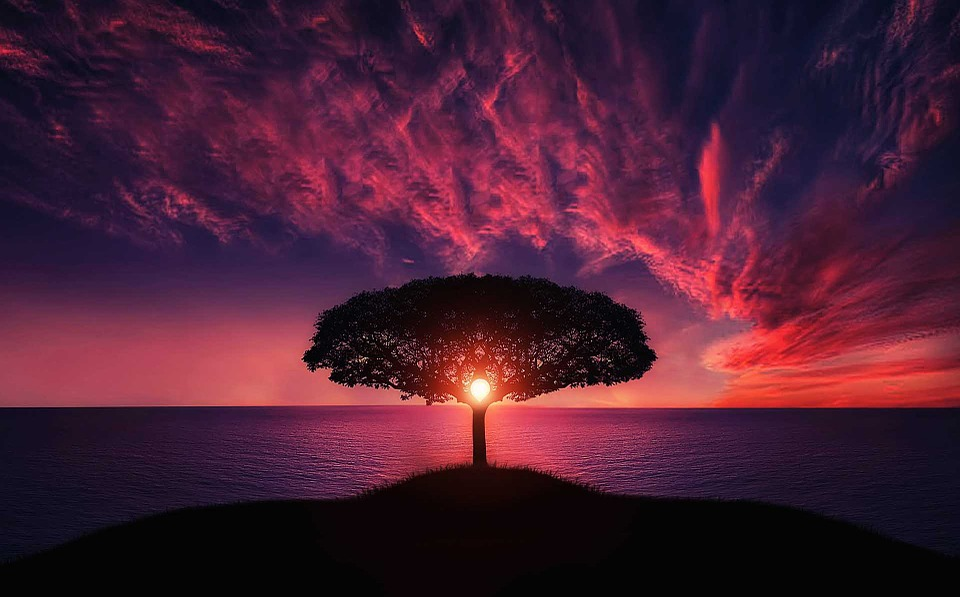 Tree, Sunset, Amazing, Beautiful, Breathtaking