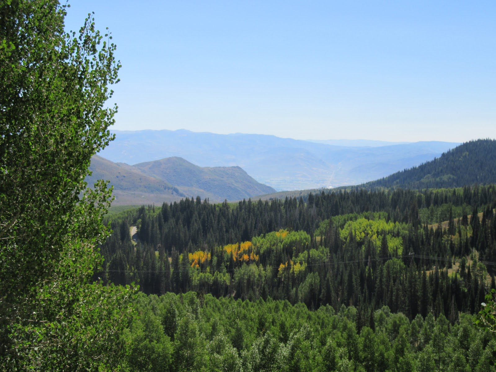 Views southeast of forest towards Midway from Guardsman Pass.