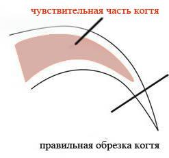 C:UsersBadaboomDesktopsoveti_inf_clip_image008.jpg