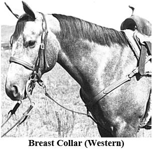 Horsemanship manual
