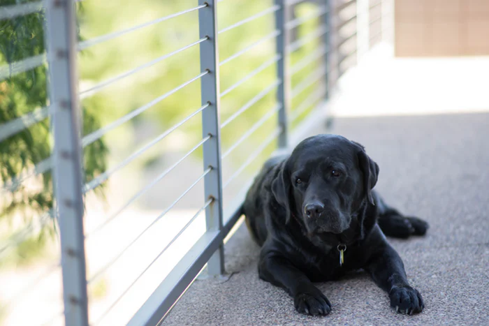 Black Dog Depression (A comprehensive guide)