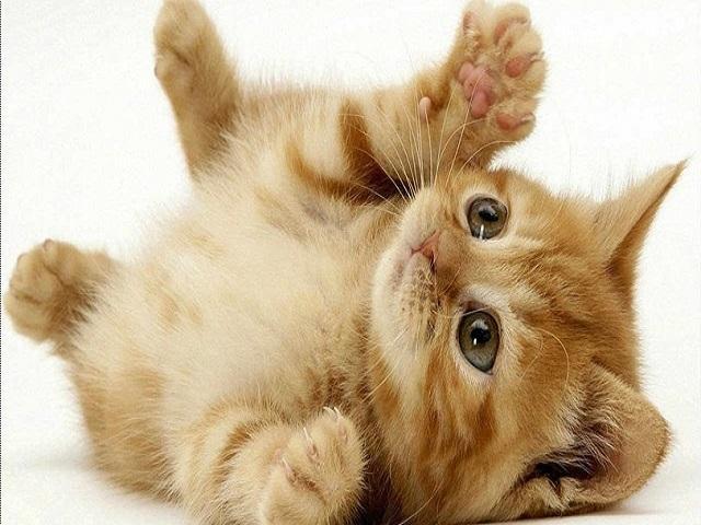 Mỗi giấc mơ về mèo lại có những lý giải khác nhau