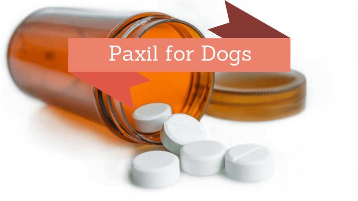 Dog Anxiety Medication(9+)