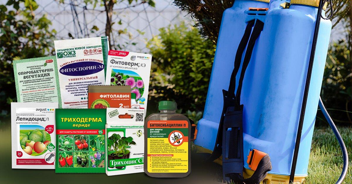 Препараты для борьбы с насекомыми и болезнями черешни