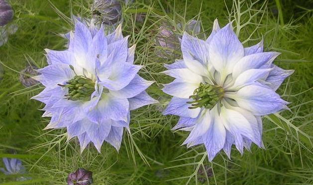 Chiêm ngưỡng hoa tình yêu làm siêu lòng giới trẻ - Ảnh 4