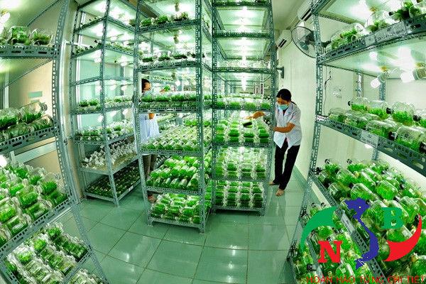 Giải đáp: Vì sao giải ngân gói tín dụng nông nghiệp công nghệ cao 100.000 tỷ chậm?