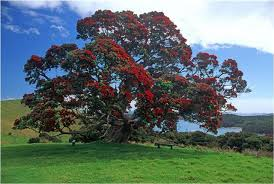 Image result for Rata tree