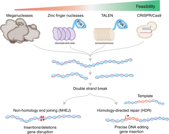 The CRISPR tool kit for genome editing and beyond | Nature Communications