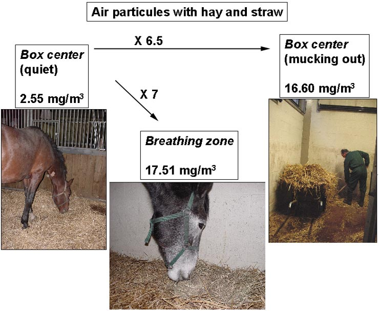 Concentration of airborne particles in conventional stables.