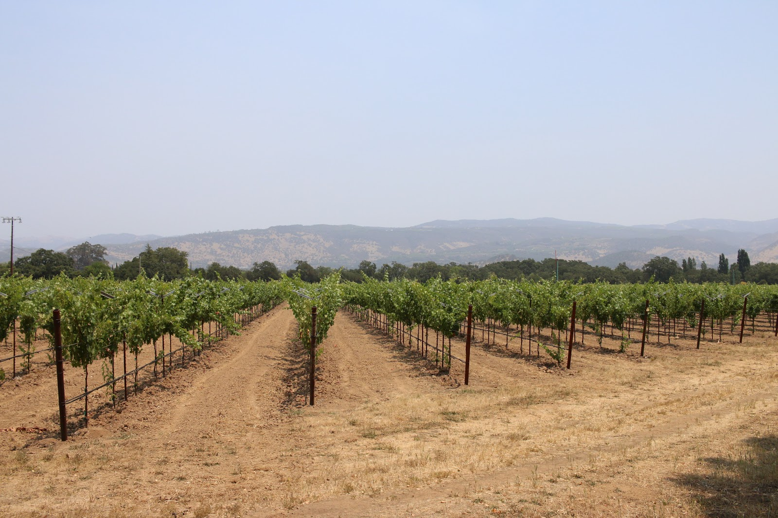 Bicycling best road in Napa County - Oakville Grade Road - photo of vineyards
