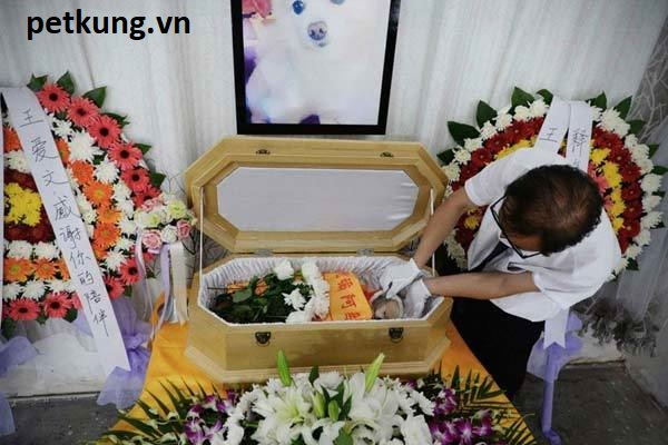Cách chôn mèo chết ý nghĩa và nhân đạo nhất