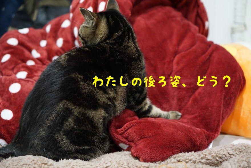 キャンペーンでゲットしよう!世界にひとつだけの猫型キーケース