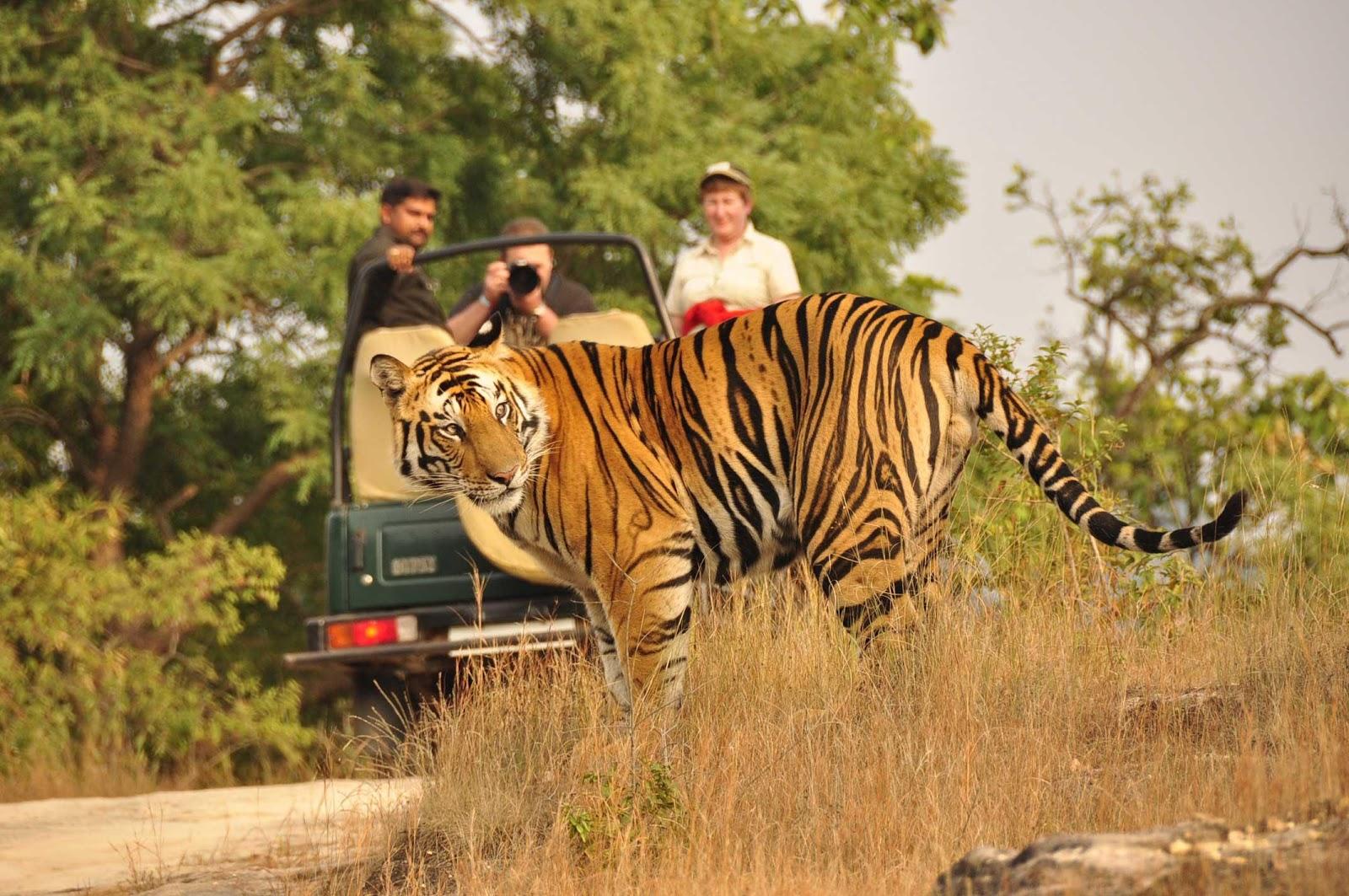 2) Jungle Safari in Chhatisgarh-.jpg