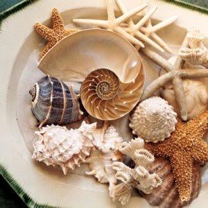 Image result for shells centerpiece
