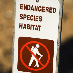 Modest Trump Admin Reforms Could End Worst Abuses of Endangered Species Act  – InsideSources