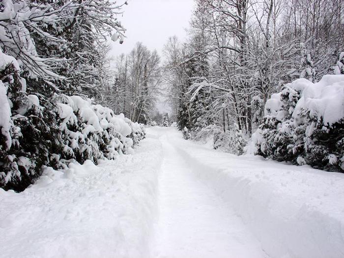 Tuyết phủ đầy hai hàng cây ở Sapa
