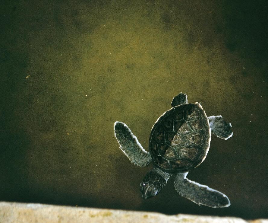 tanjung benoa turtle conservatory