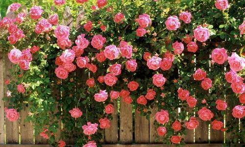 Giải mã nằm thơ thấy hoa cùng số đề Việt