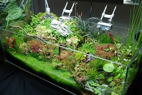 Тропический лес в аквариуме