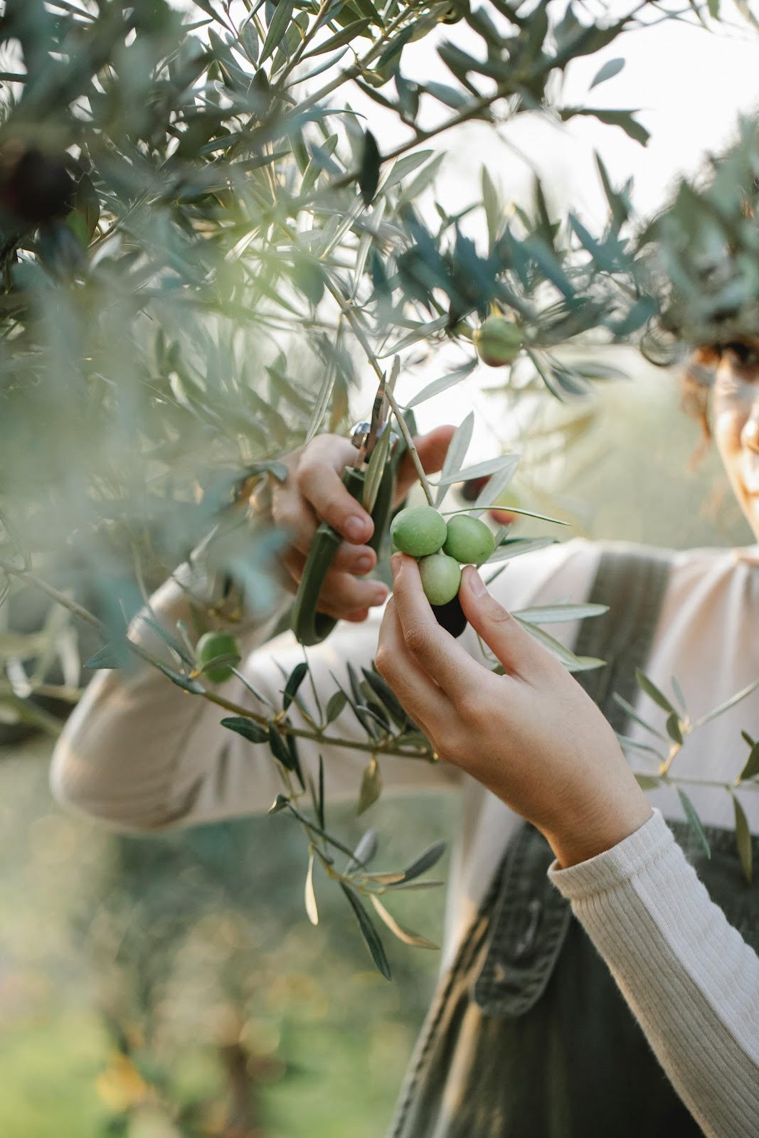 Texas Olive Oil: Answers To The Most-Asked Questions