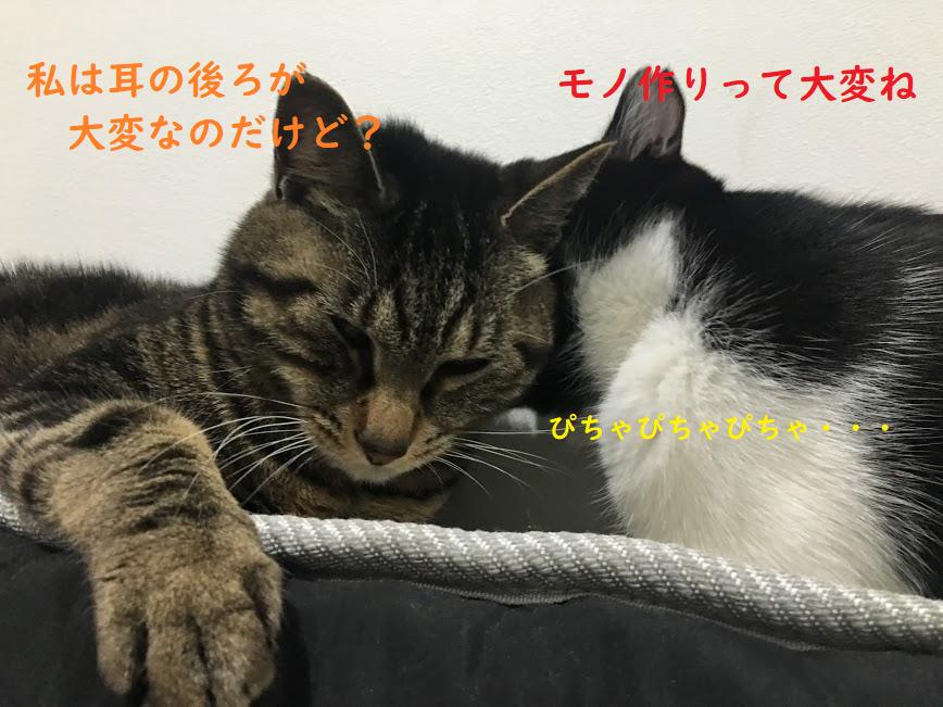君の名は。の新海誠監督はかなりの猫好き?猫役で監督の声まで?過去の作品に登場する猫たち