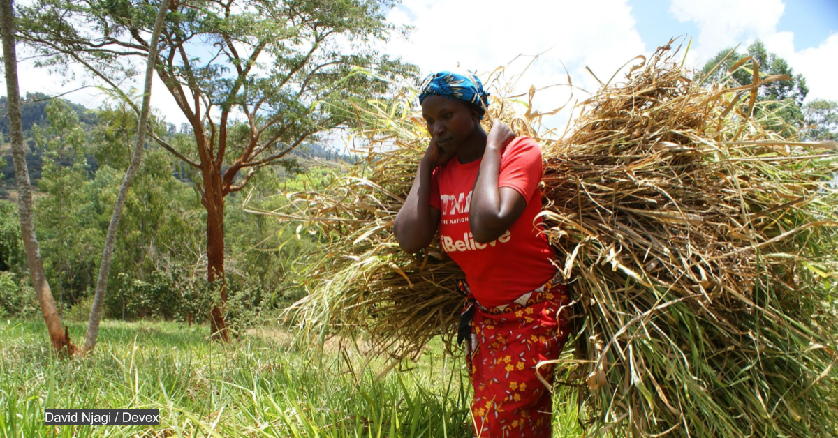 The 'wonder grass' improving food security in Kenya