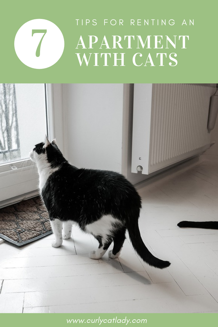 7 Tips for Renting an Apartment with Cats Pinterest graphic