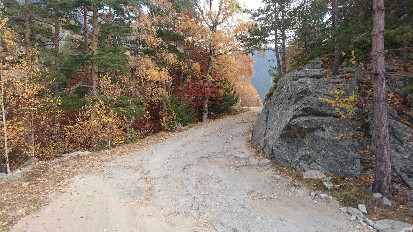 Rough Road and fall colors on leaves of trees on bicycle climb to Rila