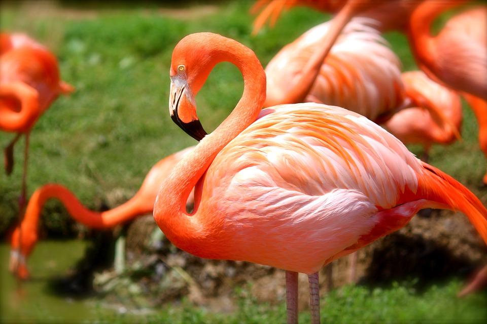 flamingo-635700_960_720.jpg