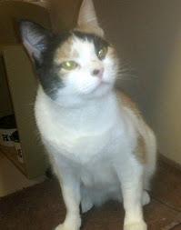 Susi, a calico cat