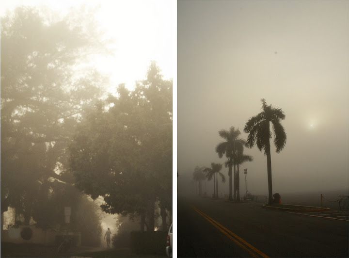 Fogtych