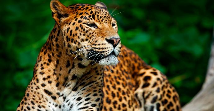 Parque Nacional Yala: vida salvaje en Sri Lanka