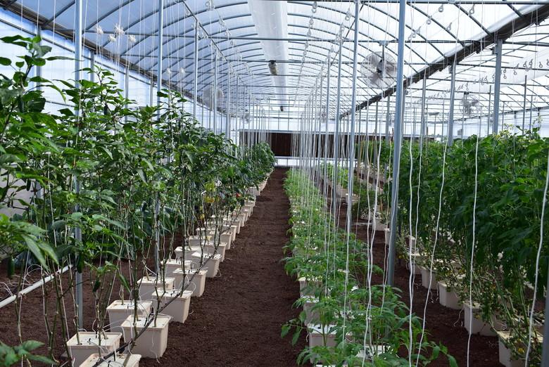 The Dutch Bucket System hydroponics system
