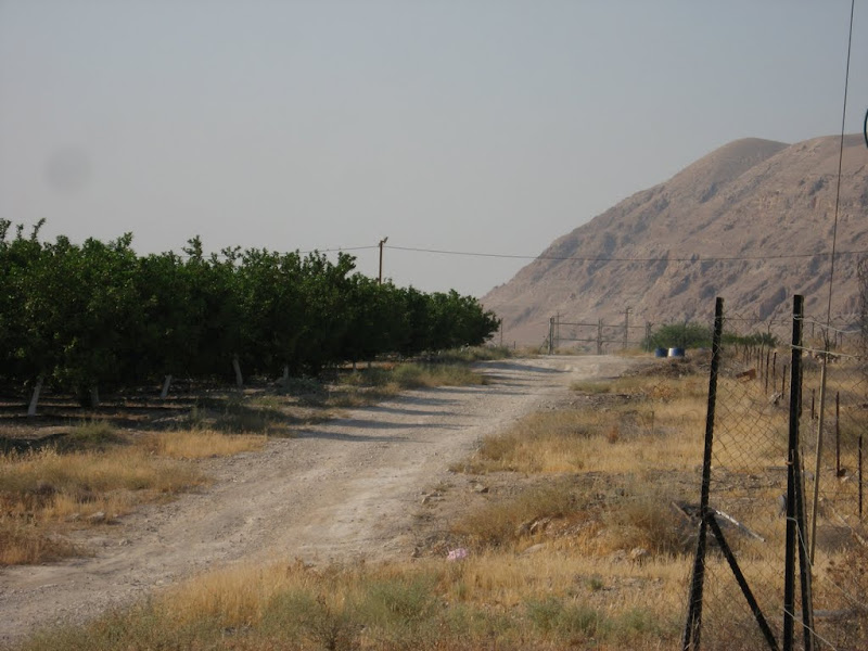 Agriculture at Mevoot Yericho NW of Jericho