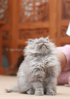 Perkembangan Anak Kucing Dari Minggu Ke Minggu