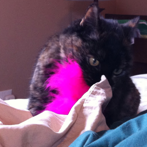 Pink fluffy cat toy must be still!