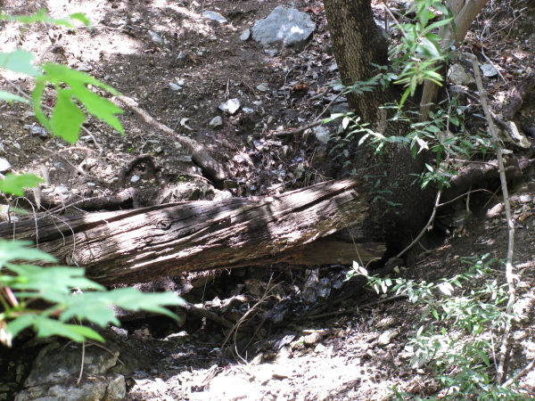 a very small spring on the hillside behind a fallen log