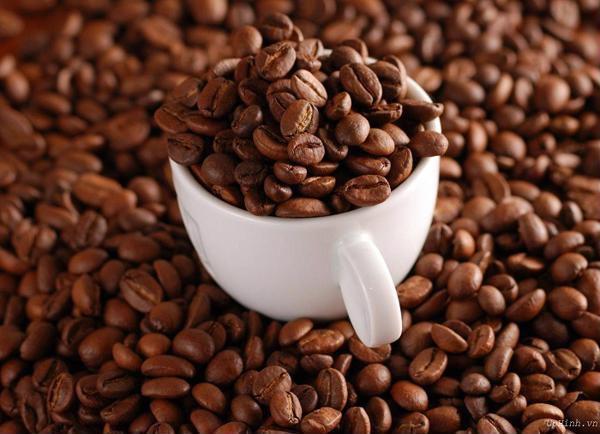 Motherland cung cấp cho bạn những hạt cà phê robusta, café giá sỉ chất lượng