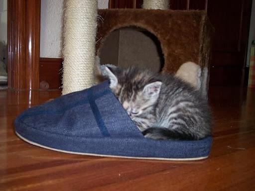 nuestros peludos y sus lugares o the cat in the box. 101_2761