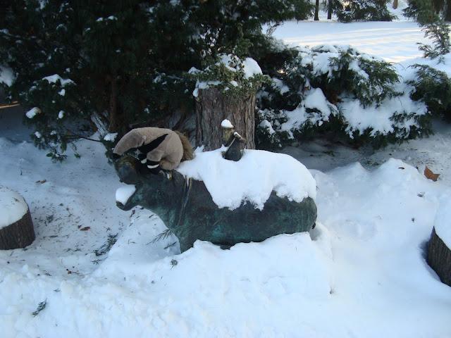 Hipoczyściciela - jedynego krasnala we wrocławskim zoo - Tadziu poznał już zimą!