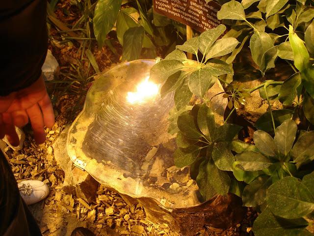 Terrarium zuków