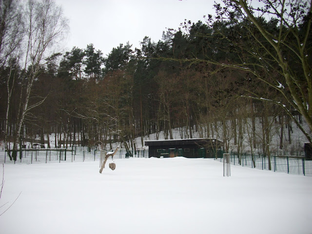 Chatka oryksów i sitatung - wybiegi zewnętrzne zajęte przez śnieg