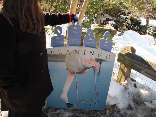 Kilka dodatkowych faktów o flamingach