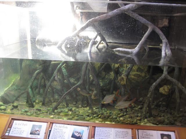Akwarium w pawilonie Australii