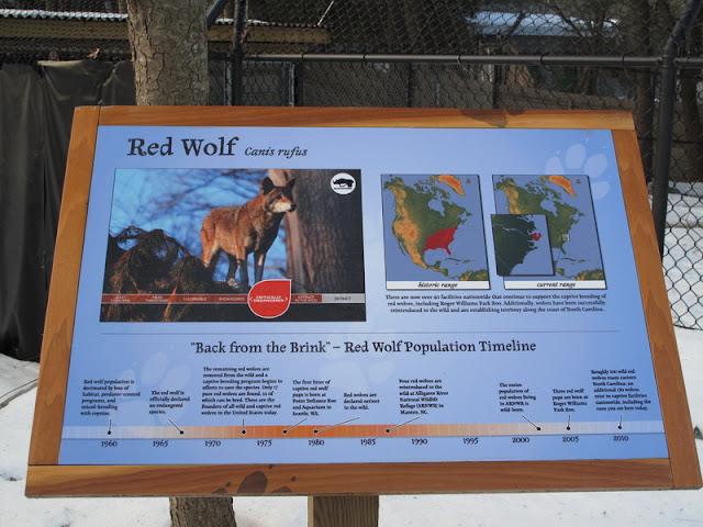 Wilk rudy - tabliczka
