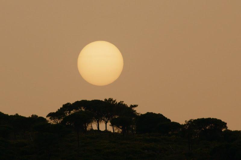O sol na arrábida
